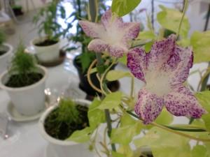 花弁が5つに分かれ、模様の入り方がちょっと変わってる