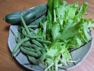 無農薬野菜です