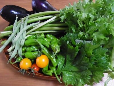 我が家の無農薬野菜